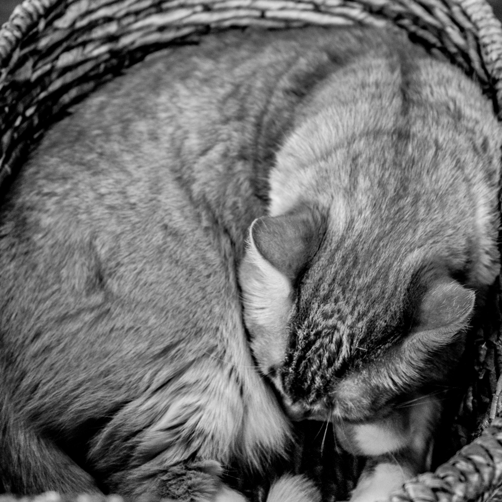 A black and white image of a cat sleeping